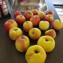 Fantastiske æbler - sprøde og søde